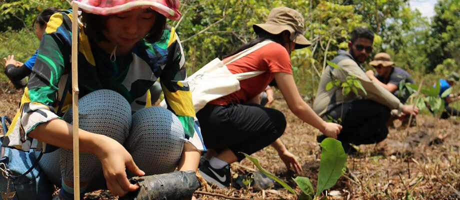 Reforestation Facts That You Should Know